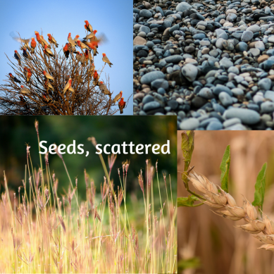 seeds scattered